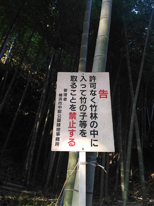 本郷ふじやま公園竹林